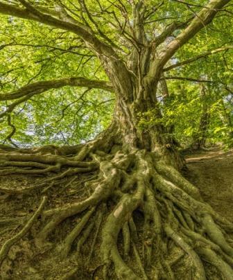 kořeny našeho života